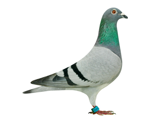 NL11-1509968_1
